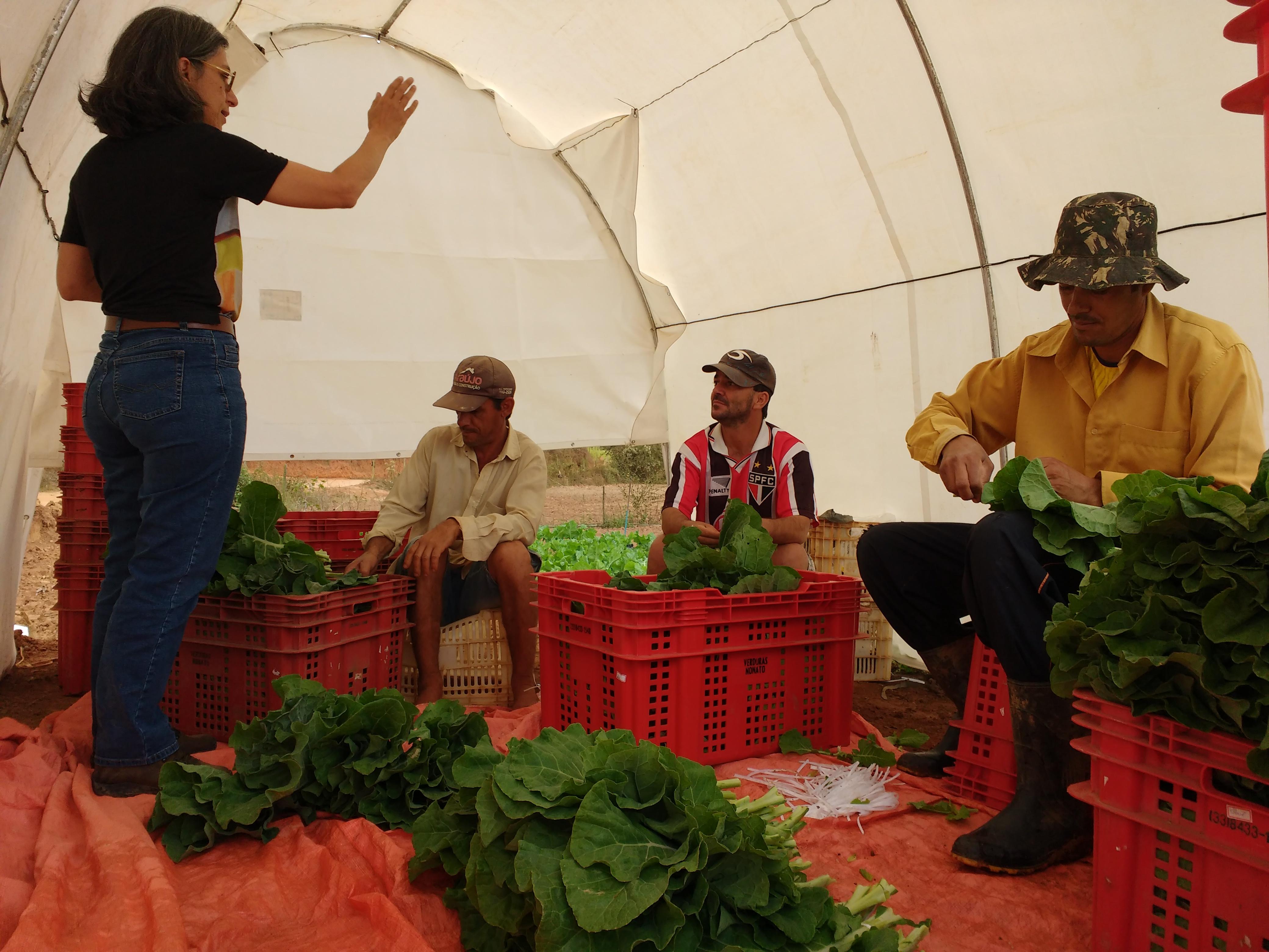 Comunicação e transferência de tecnologia para redução das perdas pós-colheita e do desperdício de hortaliças do campo à mesa